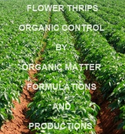 FLOWER THRIPS ORGANIC CONTROL BY ORGANIC SOLUTION  FORMULATION AND PRODUCTION PROCESS